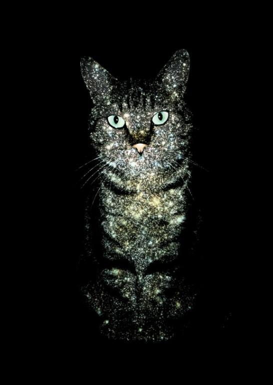 [デザイン]世界一美しいかもしれない猫の画像