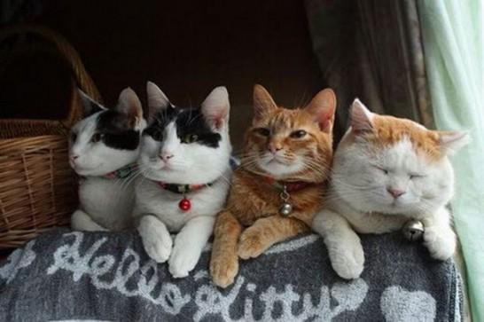 世界でもっとも怠け者な、クスっと笑えるかわいい猫