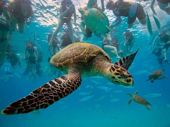 水の世界へようこそ!水中で撮影された素晴らしい写真